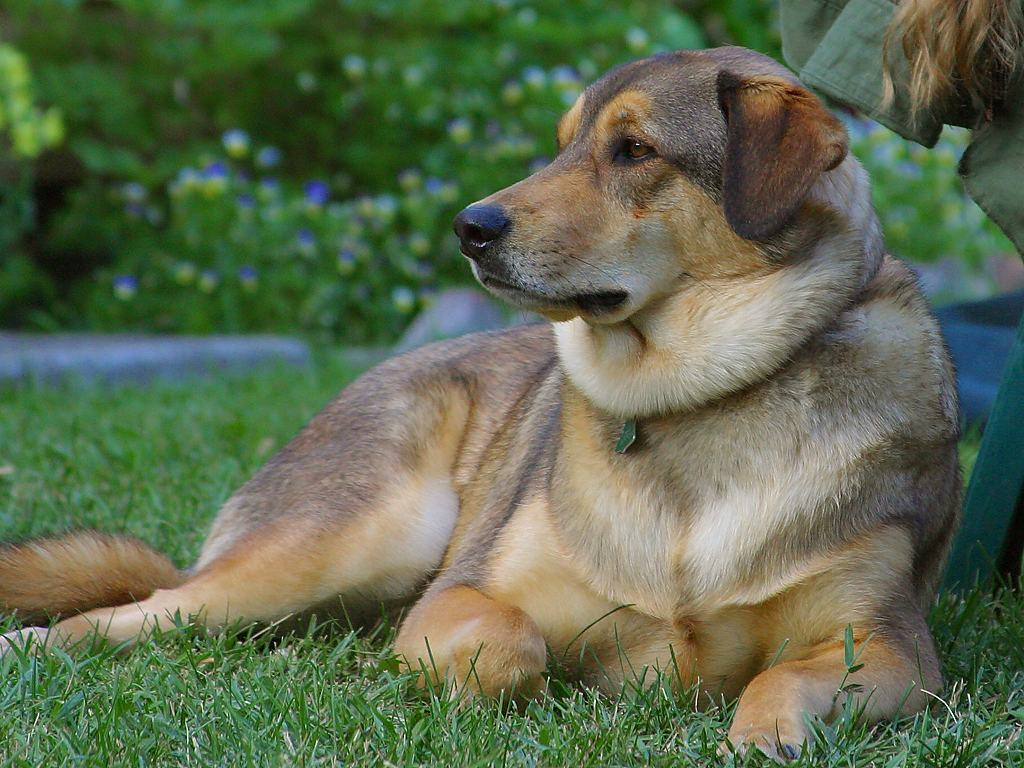 Types of dog obedience training dog training for What type of dog is this