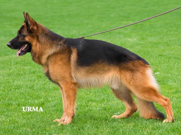 dog training advise