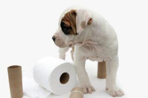 how to train a house dog