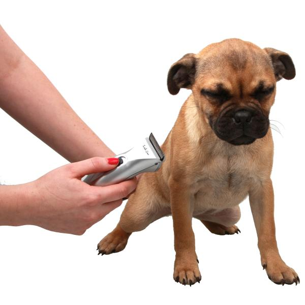 Essential Items For Every Dog Owner Dog Training