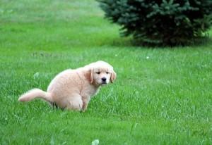 Potty training a dog