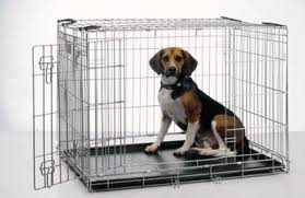Tips in Crate Training