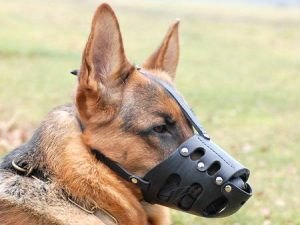 muzzle dogs