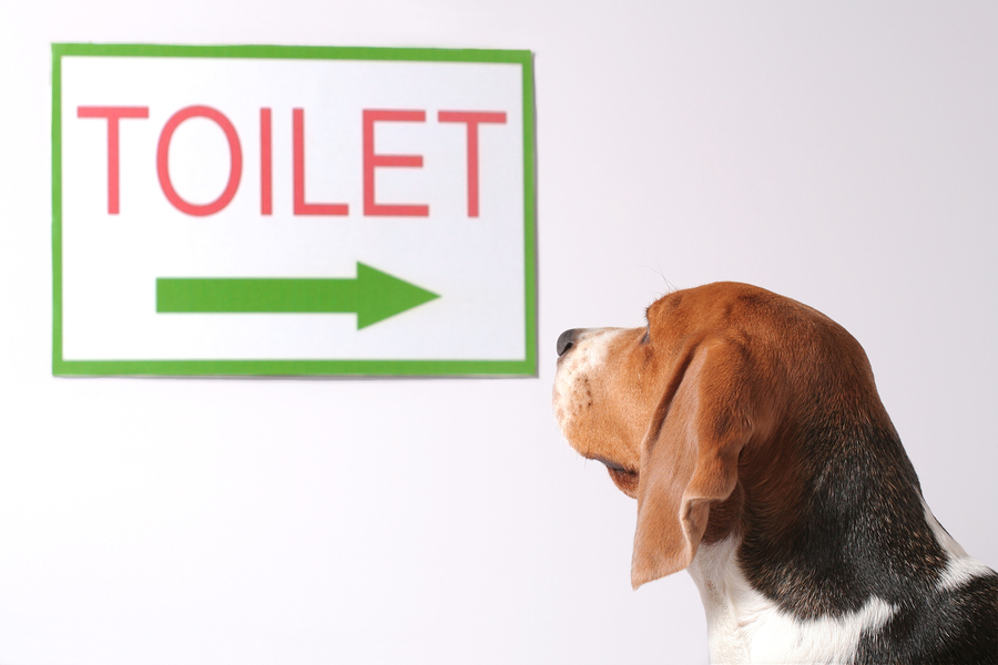 Dog training tag archive how to potty train your dog for Can you train a cat to go outside for bathroom