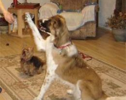 Teaching Your Dog to Sit