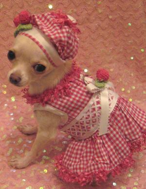 Reflective Dog Harnesses