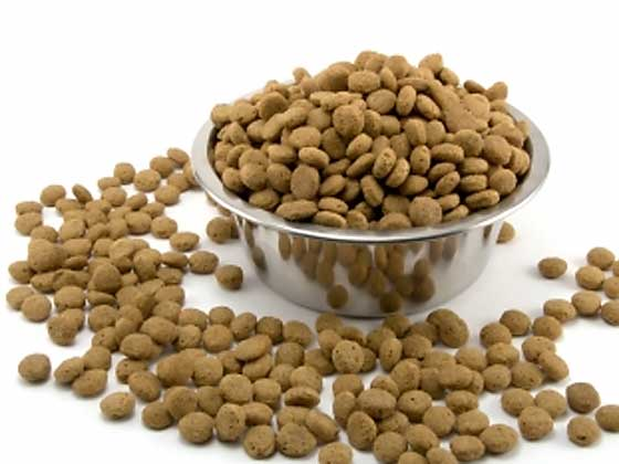 Healthiest Grain Free Dog Food