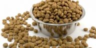 healthiest dog food