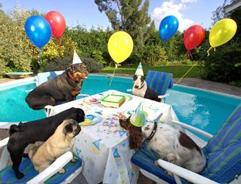 How to Organize A Dog Birthday Party