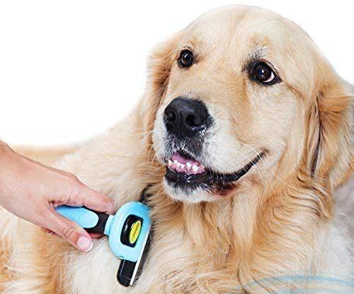 Best Dog Brush For Short Hair Shedding Dog Instructor